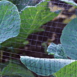 4 x 2m Garden Pond Netting