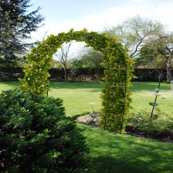 Kingfisher Garden Arch